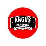 Angus-hereford